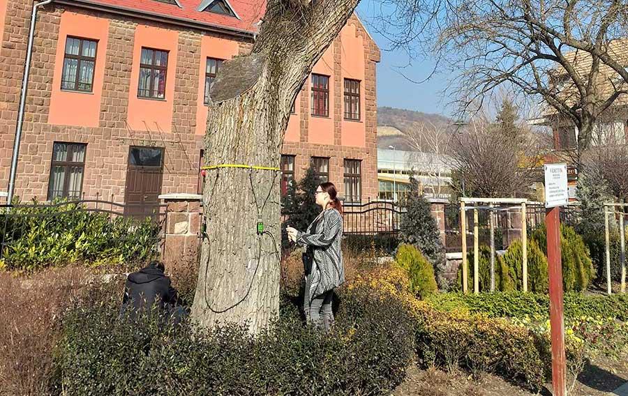Városi fák műszeres vizsgálata – meglepő eredményekkel